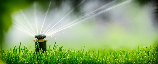 Automatic sprinkler system watering the lawn Premium Photo