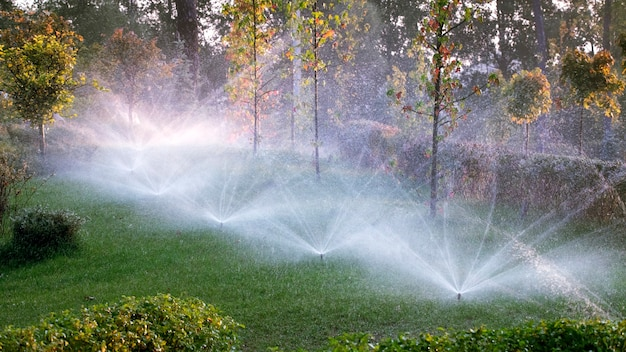 The automatic watering system irrigates lawn grass and other plants in the park at dawn. the sun's rays break through the branches of trees. Premium Photo