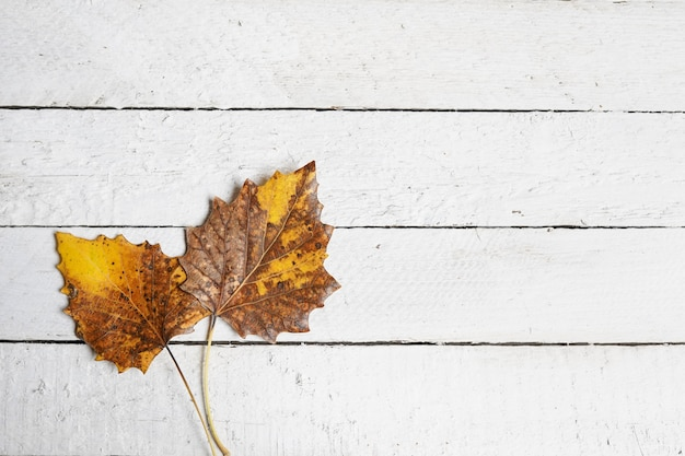 Autum with leaves on white wood, copy space Premium Photo