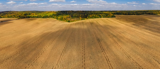Autumn aerial panoramic drone countryside corn field and forest Premium Photo