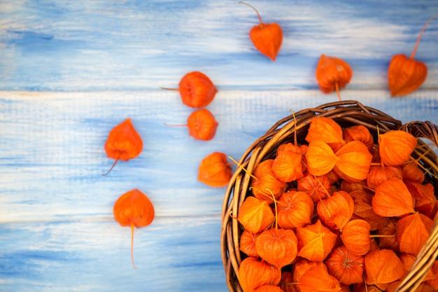 Осенний фон. ярко-оранжевые ягоды физалиса на синем фоне древесных. Premium Фотографии