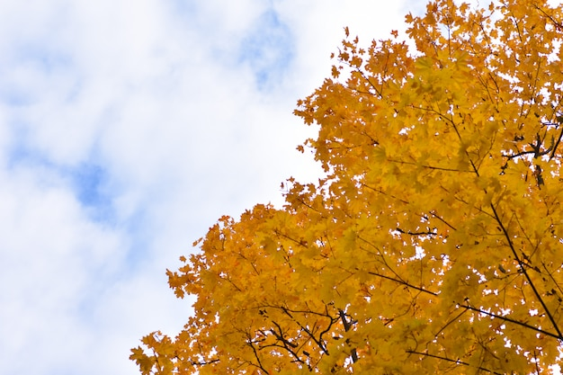 Autumn background divided by a cloudy blue sky and yellow tree leaves Premium Photo