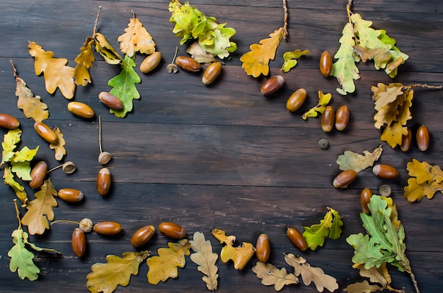 Autumn background with acorns and oak leaves Premium Photo