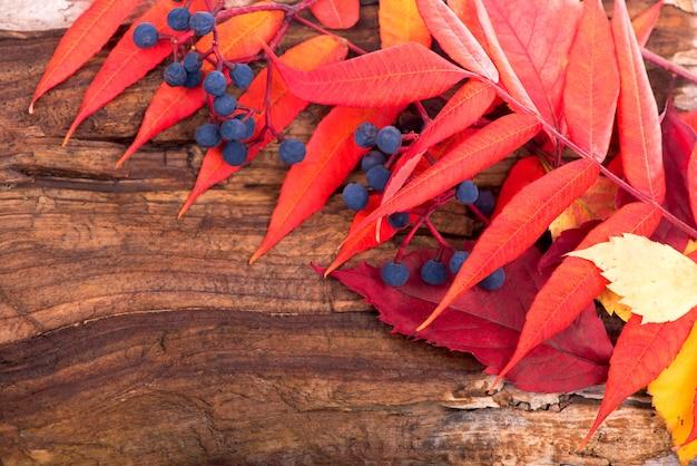 木の板に色の葉と秋の背景。 Premium写真
