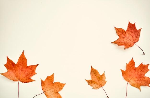 秋のカラフルな構図。 Premium写真