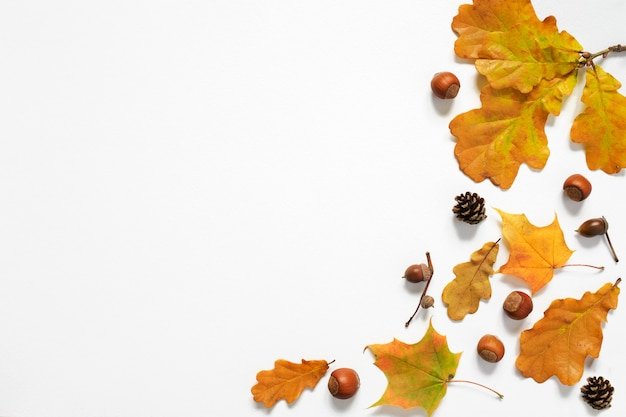 Autumn composition. autumn leaves, acorns, cones, nuts. top view, copy space Premium Photo