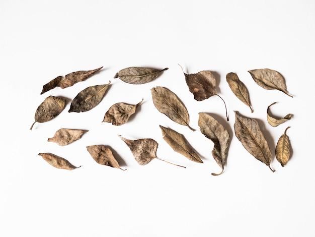 秋の組成物。白い背景の上の茶色の葉で作られた境界線。秋のコンセプトです。秋の感謝祭のテクスチャ。フラット横たわっていた、トップビュー、コピースペース Premium写真