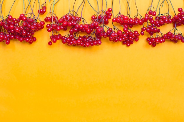 Autumn composition. frame made of red viburnum berries on yellow background Premium Photo