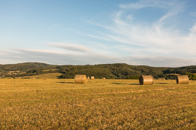 Autumn concept with big rolls of hays Free Photo