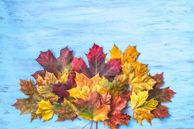 秋の創造的な組成物。 Premium写真