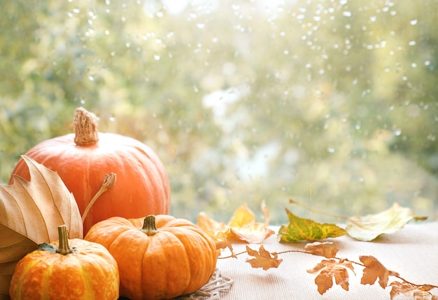 Autumn decorations on a window board on a rainy day, space Premium Photo