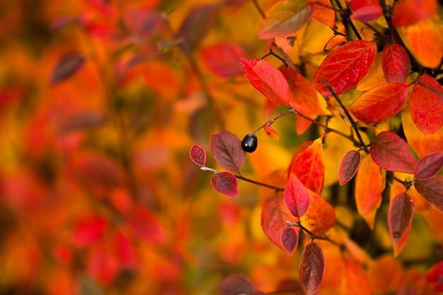 Осенний дизайн цветочный с листьями в сезон цветов. Premium Фотографии