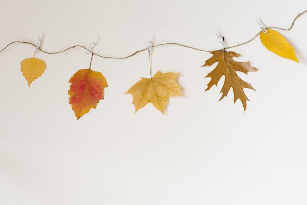 Autumn fallen leaves hang on a rope with clothespins on a light beige background Premium Photo