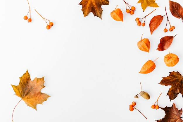 Autumn flat lay background on white Free Photo
