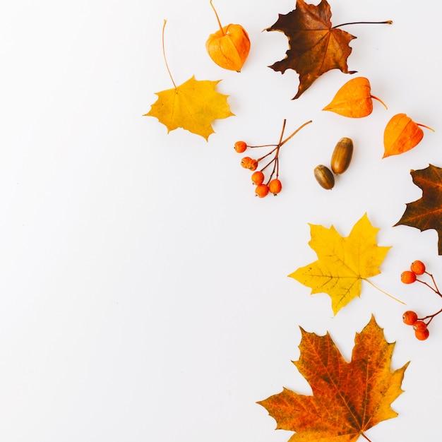 Autumn flat lay background on white Free Photo