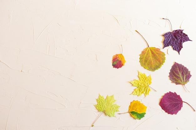 秋フラットレイアウト:パステルニュートラルの背景に赤、黄色、バーガンディ、グリーンの葉。トップビュー、コピースペース。 Premium写真