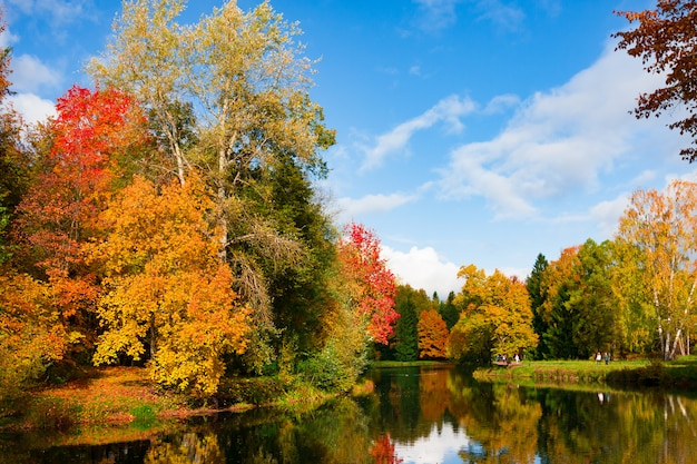 Autumn foliage in pavlovsky park, pavlovsk, saint petersburg Premium Photo