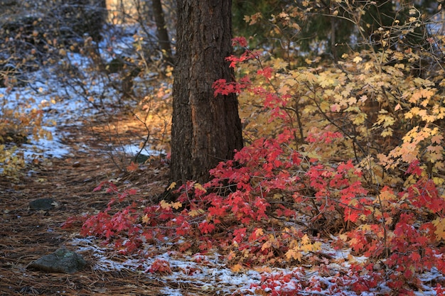 Autumn forest leaves Premium Photo