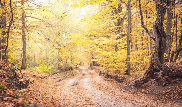 地上道路のある秋の森。美しい風景 Premium写真