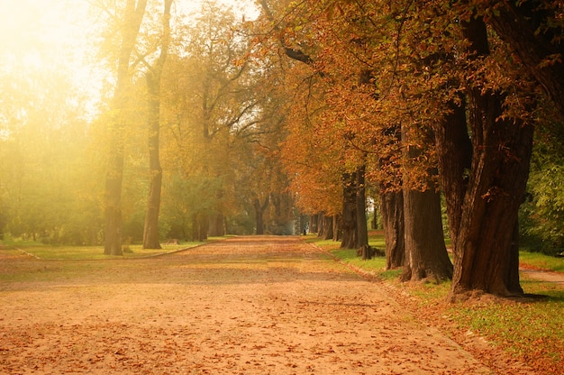 Autumn forest. Free Photo