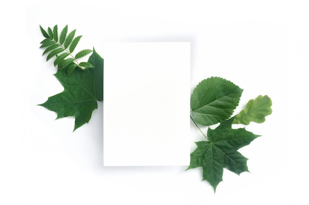 Autumn green leaves and blank card isolated on white Premium Photo