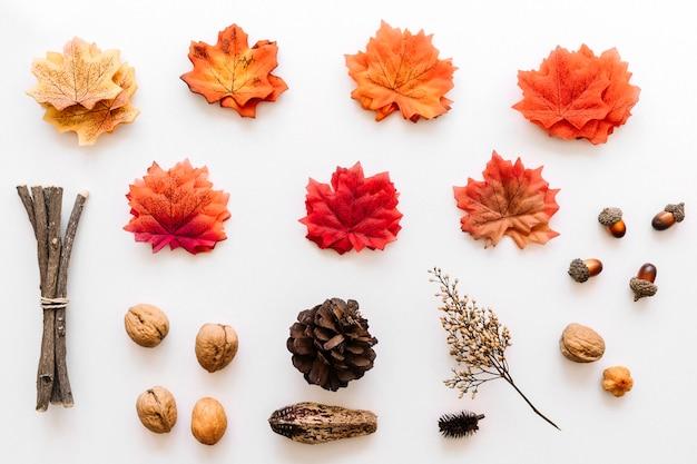 Autumn herbarium of colored tree details Free Photo