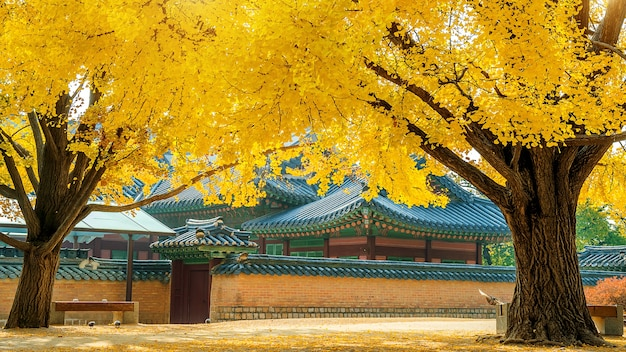 韓国景福宮の秋 無料写真