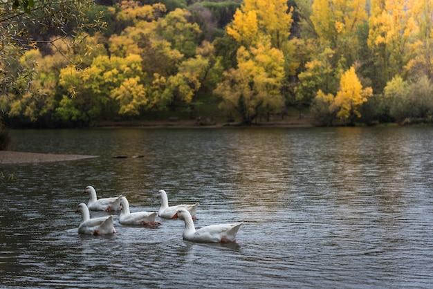 Autumn in the lake Premium Photo