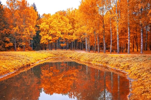 池と反射のある公園の秋の風景。 Premium写真