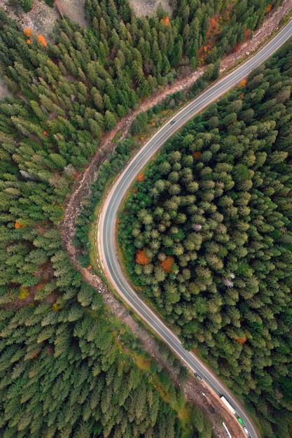 秋の風景、山の森の舗装道路。黄色と赤のキャストツリーと緑の針葉樹が絵のようなコントラストを作り出しています。 Premium写真