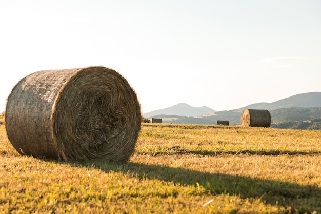 Autumn landscape with big rolls of hays Free Photo