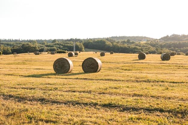 Autumn landscape with hays field Free Photo