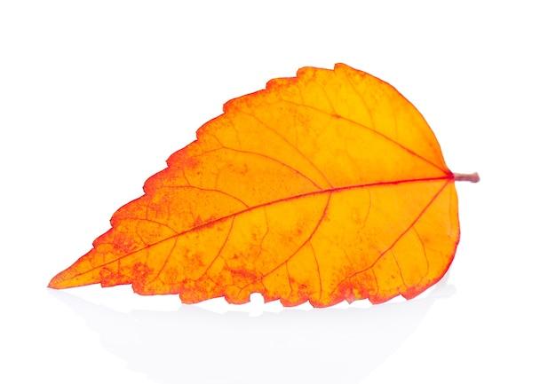 Осенний лист изолирован на белом фоне | Премиум Фото