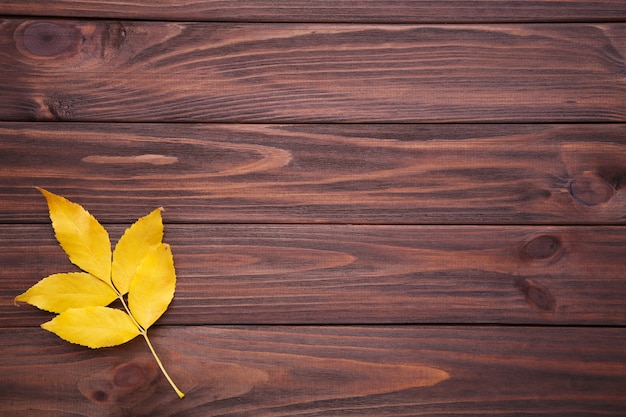 Autumn leaf with berries on a brown background Premium Photo