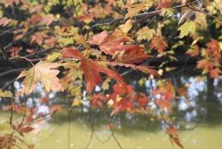 Autumn leafs, bspo07 Free Photo