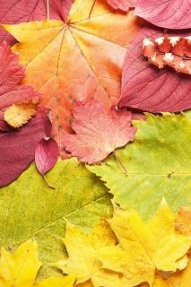 autumn leaves  bright Free Photo