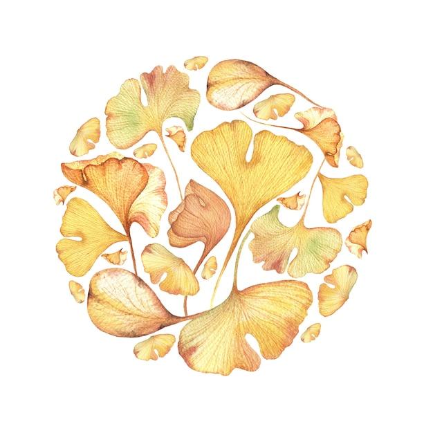 紅葉と果実の水彩手描きイラスト。秋のサークルイチョウ葉。 Premium写真