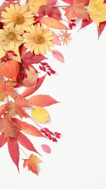 秋の紅葉と白い背景の上の花 Premium写真