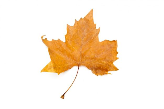 Autumn leaves isolated on white Premium Photo
