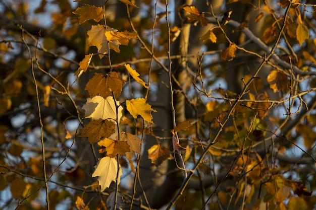 木の枝に紅葉 無料写真