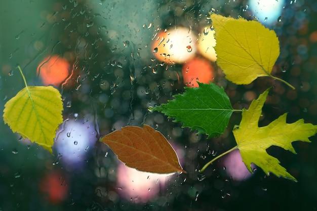 비오는 날씨에 젖은 유리에 단풍 프리미엄 사진