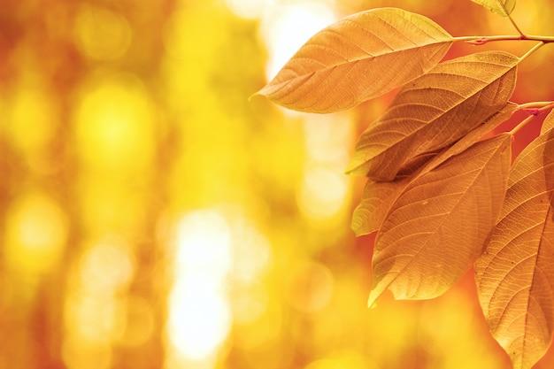 Autumn leaves in the sun Premium Photo