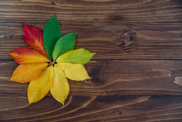 Autumn leaves transition from green to red on wooden background Premium Photo
