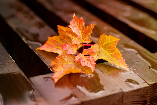 Autumn leaves on wet bench Premium Photo