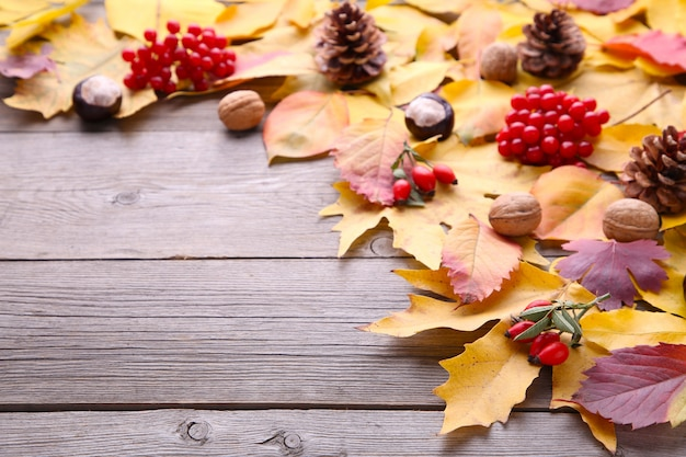 Autumn leaves with berries on a grey background Premium Photo