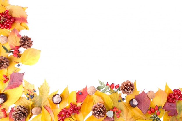Autumn leaves with berries isolated on white Premium Photo