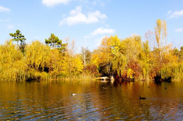 Autumn leaves Premium Photo