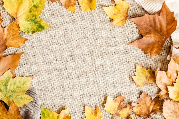 Autumn maple leaves isolated on brown. Premium Photo
