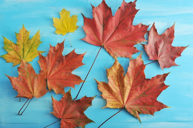 Autumn maple leaves red and yellow on a blue wooden surface Premium Photo