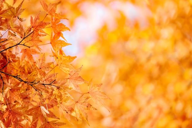 秋のカエデモミ葉 Premium写真